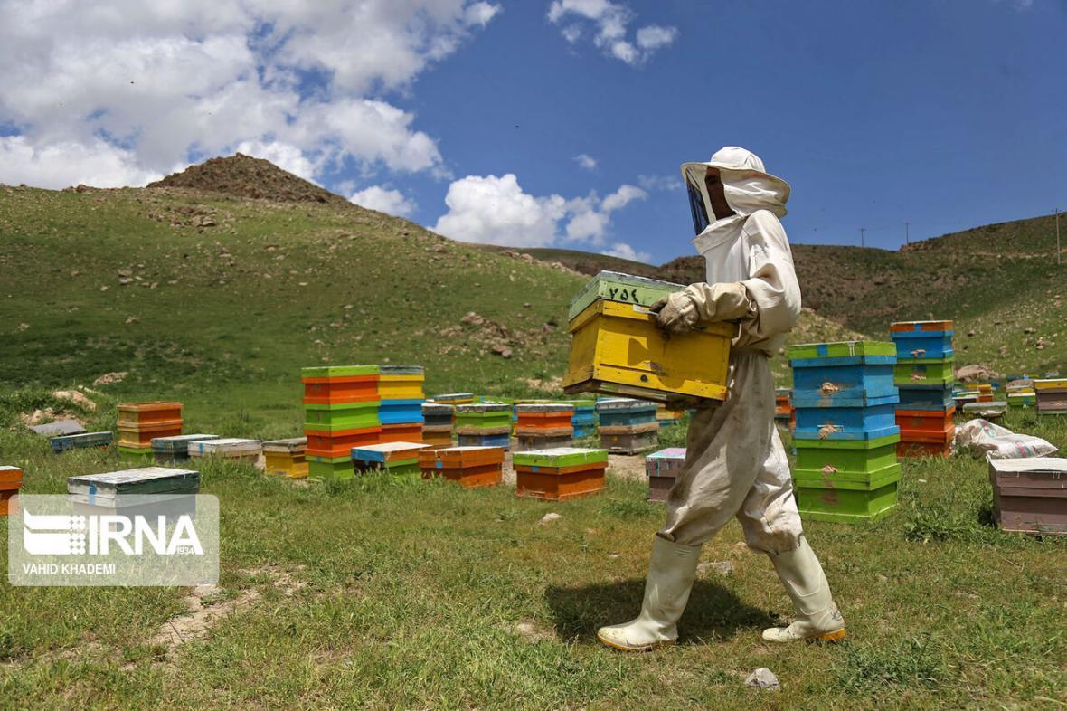 خبرنگاران استقرار 45 هزار کندوی عسل در مناطق ییلاقی شاهین دژ